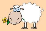 Fedd My Sheep